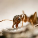 Let us help you with the ants taking over your personal space.
