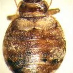 bed bug control mission viejo